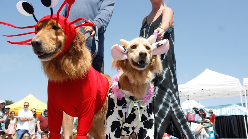 dogSurf and Turf (Costume Contest)