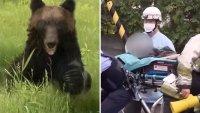 Captado en video: oso salvaje ataca a una persona en plena calle