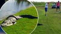 La escena sorprendió a todos en un campo de golf en Naples, Florida, y para algunos era hasta divertido. Las fotos se hicieron virales y habían...