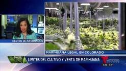 Existen limitaciones para el cultivo de marihuana