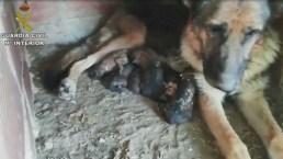 Seis perritos son enterrados vivos en España