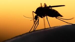 Mosquitos del sur de Florida estarían transmitiendo Zika