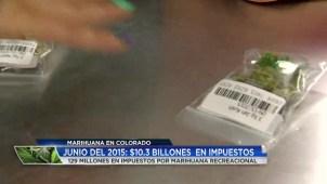 Distribución de los impuestos recolectados por la venta de la marihuana