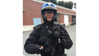 Chihuahua That Led Cops on Calif. Bridge Chase Is Adopted