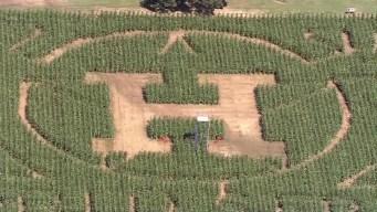 Granjero crea laberinto en honor a los Astros