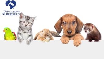 Desocupar los Albergues logra más de 88,000 adopciones