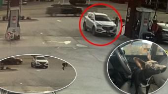 De terror: perrito en gasolinera pone auto en reversa
