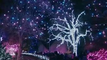 Zoológico de Denver ofrece un espectáculo de luces imperdible
