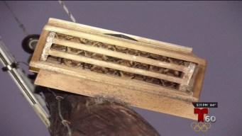 Crean casas para murciélagos en batalla contra el Zika