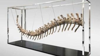Galería subasta una cola de dinosaurio en $96,774
