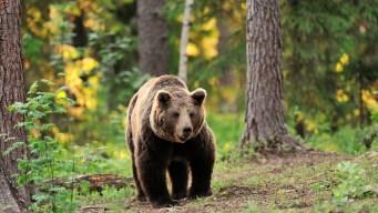 Recomendaciones ante avistamientos de osos
