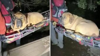 Rescatan a perro de 190 libras en un cañón de Utah