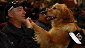 Colombia: realizan ceremonia de retiro de perros policía
