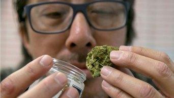 Buscan mayor apoyo a minorías en industria del cannabis