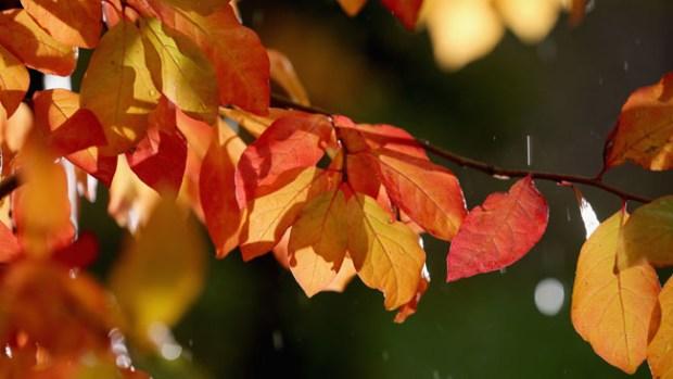 Tus fotos: Los colores del otoño en Colorado