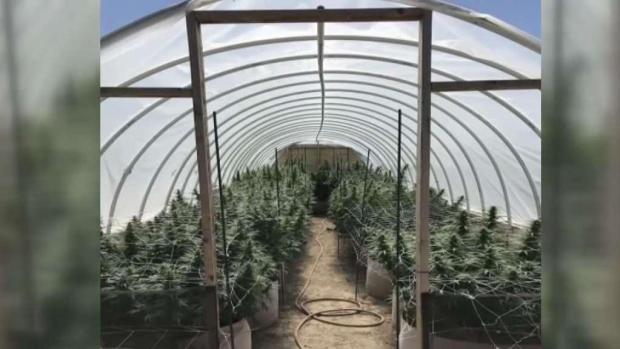 [TLMD - Denver] Golpe al mercado negro de marihuana en Colorado