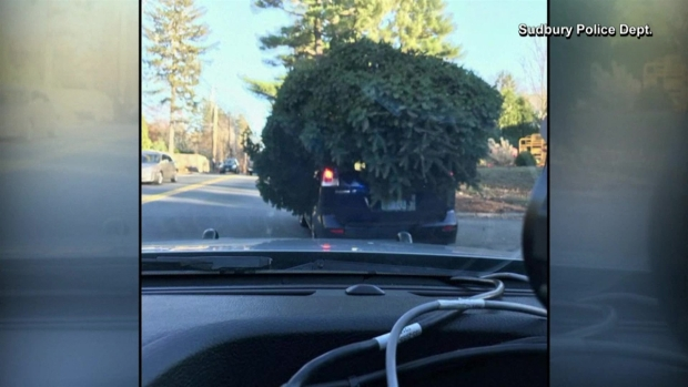 [TLMD - NATL] Lo detiene la policía por el tamaño del árbol de navidad