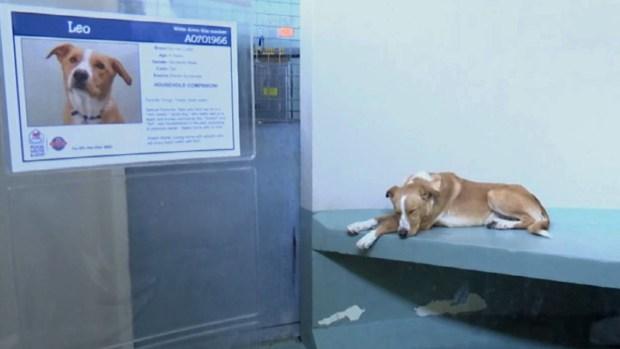 Furry Scurry: Ayuda para mascotas necesitadas