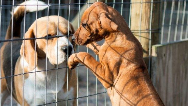 Mascotas en Aurora Animal Shelter buscan un hogar
