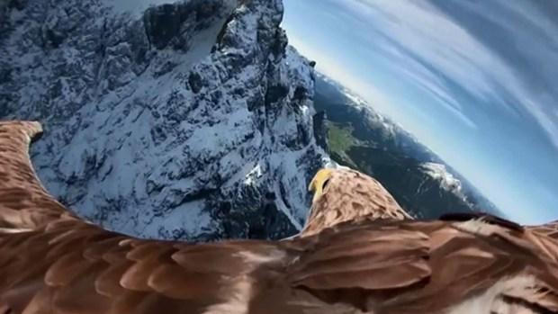 Increíble: cómo se ve el mundo con el ojo de un águila