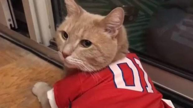 """[TLMD - LV] """"Dusty"""": el gato fanático de los Nacionales"""