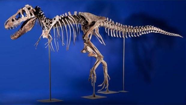 Dónde encontrar dinosaurios en Colorado