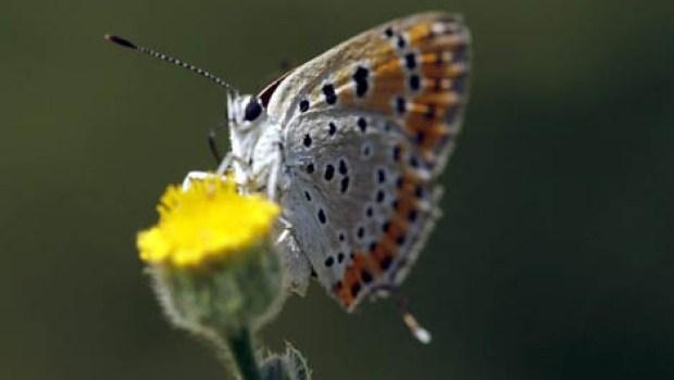 Butterfly Pavilion, un oasis en Denver