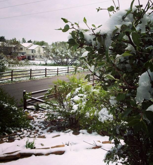 Tus fotos: Tormenta de nieve en primavera