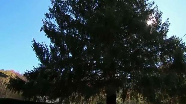 [TLMD - NY] Eligen al árbol del Rockefeller Center
