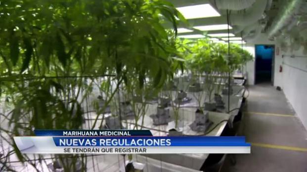 Nuevas regulaciones para venta de marihuana
