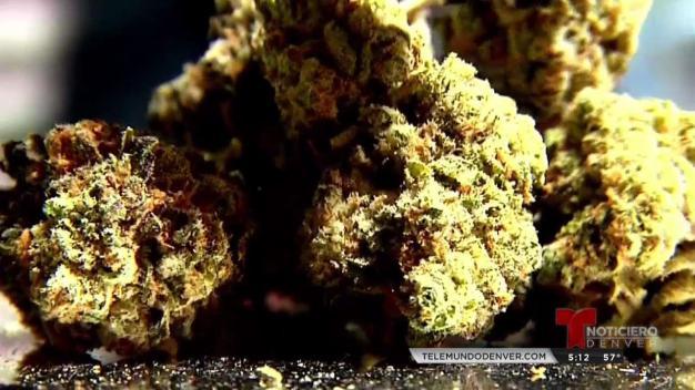 INFORME ESPECIAL: Marihuana Deportable