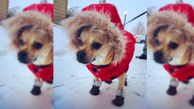 Fotos de la primera nevada del año