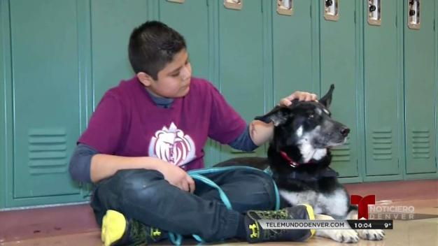 Perros terapeuta en escuela de Denver