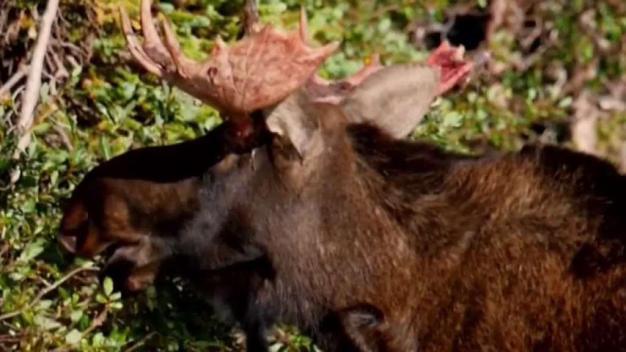 Recomendaciones para sobrevivir a ataques de animales silvestres