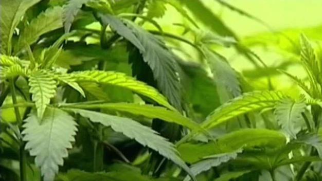 Ventas de marihuana en Colorado supera los mil millones