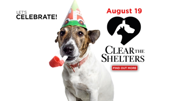 Clear The Shelters: information in English