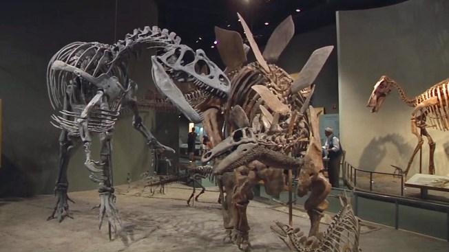 Los dinosaurios están más cerca de lo que piensas
