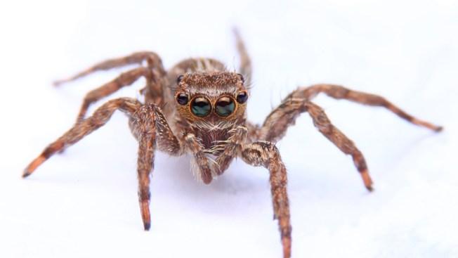 Salta de su auto al ver una araña