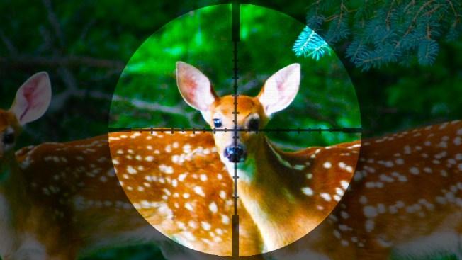 Estudian usar cazadores para combatir plaga de venados