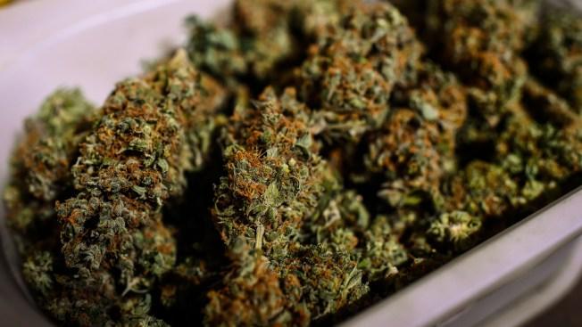 20 enfrentan cargos por tráfico de marihuana