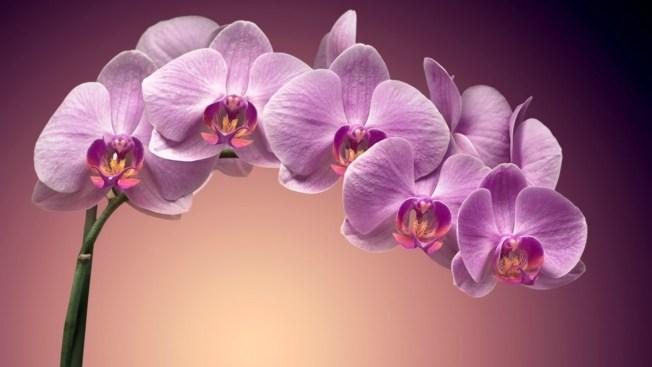 Flores de buena suerte en el horóscopo chino