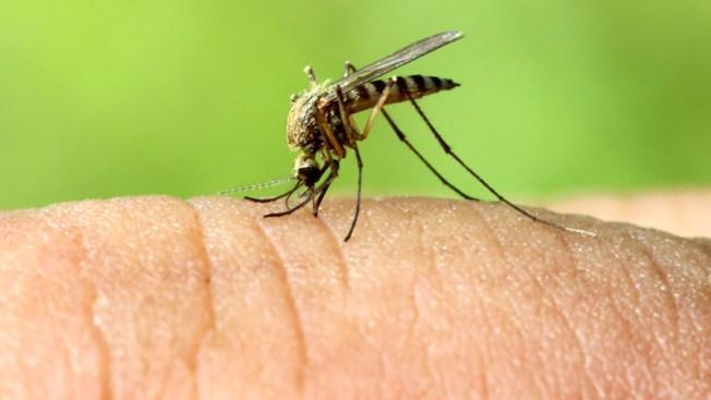 Detectan caso de virus del Nilo en Colorado