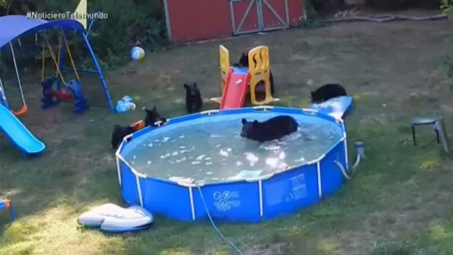 ¡Mamá, hay osos en la piscina!