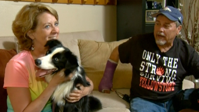 Encuentran a su perra perdida 42 días después