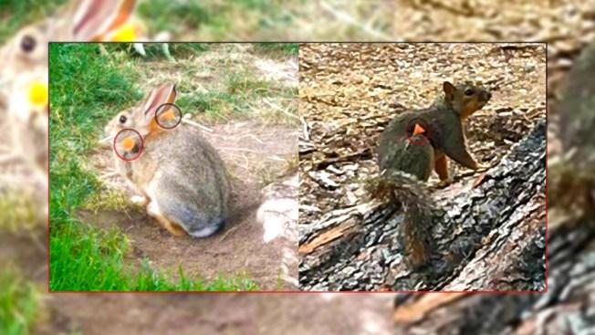 Investigan ataques a animales con dardos en Golden