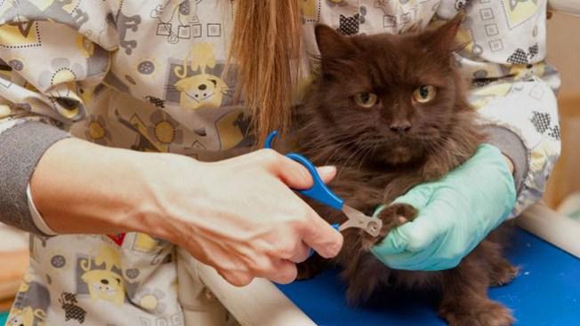 Rescatan 46 gatos de casa en Aurora