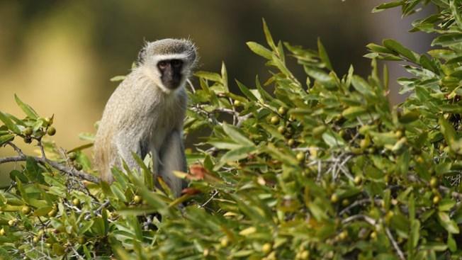 Buscan a mono suelto afuera de cine