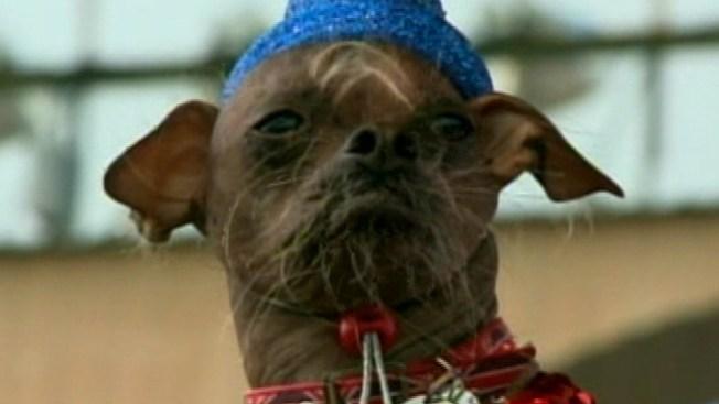 """""""Mugly"""", el can más feo"""