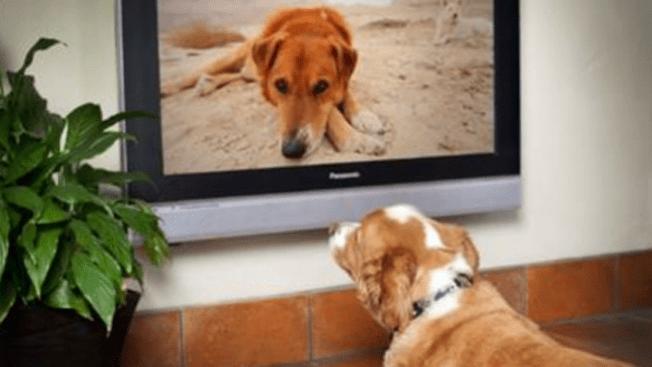 Los perros ya tienen su canal de TV
