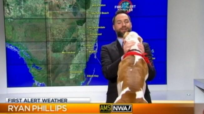 Perro sorprende a meteorólogo en vivo